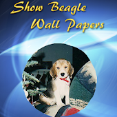 Show Beagles Wall Papers  2013