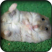 Funny Hamster Wallpapers
