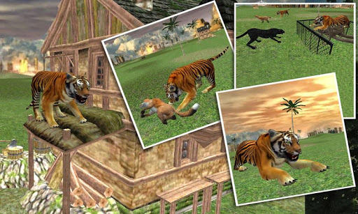 야생 정글 호랑이 공격 심