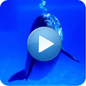 Dolphins - Sound to relax icon