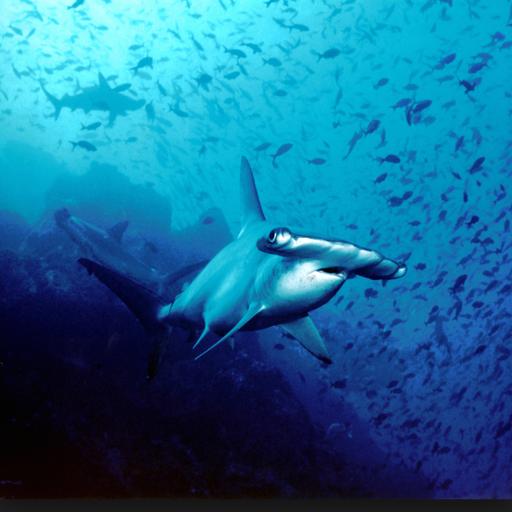 Shark Hunter Memory Game