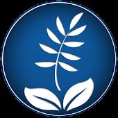 The Clean Environment - Budva