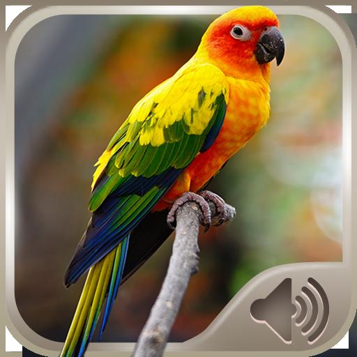 音乐の鳥の音 LOGO-HotApp4Game
