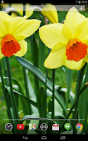 Screenshot of Daffodils Live Wallpaper