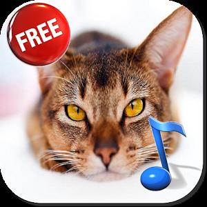 cats animal sounds book kitty 娛樂 App Store-癮科技App