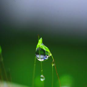 one rain drop by Jonathan Herdioko - Nature Up Close Natural Waterdrops