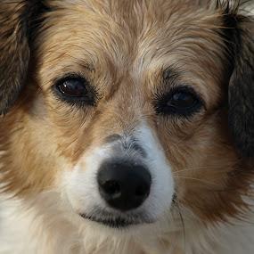 Sweet eyes by Kimmarie Martinez - Animals - Dogs Portraits ( love, sweet, pet, pets, beach, cute, dog,  )