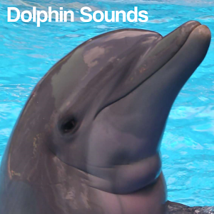 Dolphin Sounds - Android Apps on Google Play