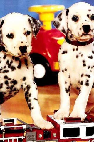 雙胞胎狗寶寶拼圖