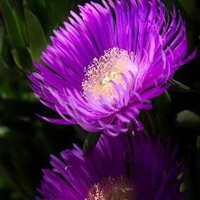 Cvijece by Sead Kazija - Flowers Flowers in the Wild
