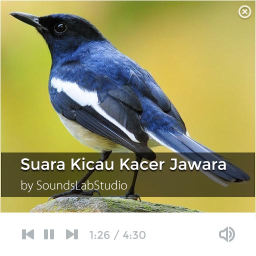 Suara Kicau Kacer Jawara