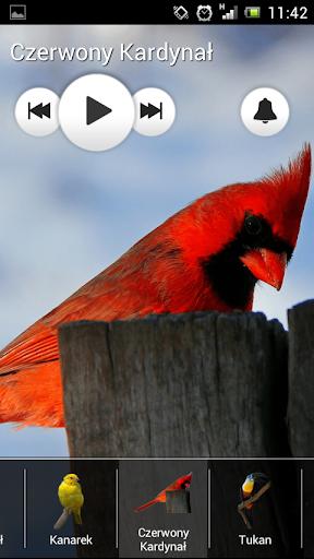 無料音乐Appの鳥が聞こえる - 着メロを|HotApp4Game