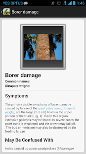 Palm Symptoms Key- screenshot thumbnail