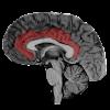 NeuroSlice