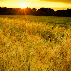Sunset in Kalchreuth by Alexander Kulla - Landscapes Sunsets & Sunrises ( sonnenuntergang, franken, landschaft, kalchreuth, sunset, wiese, natur, bayern, kalchreuther h�,  )