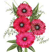 Flowers Live Wallpaper