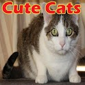 Cute Cats icon