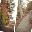 Oak trees (?)