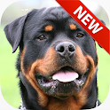 Rottweiler Wallpapers icon
