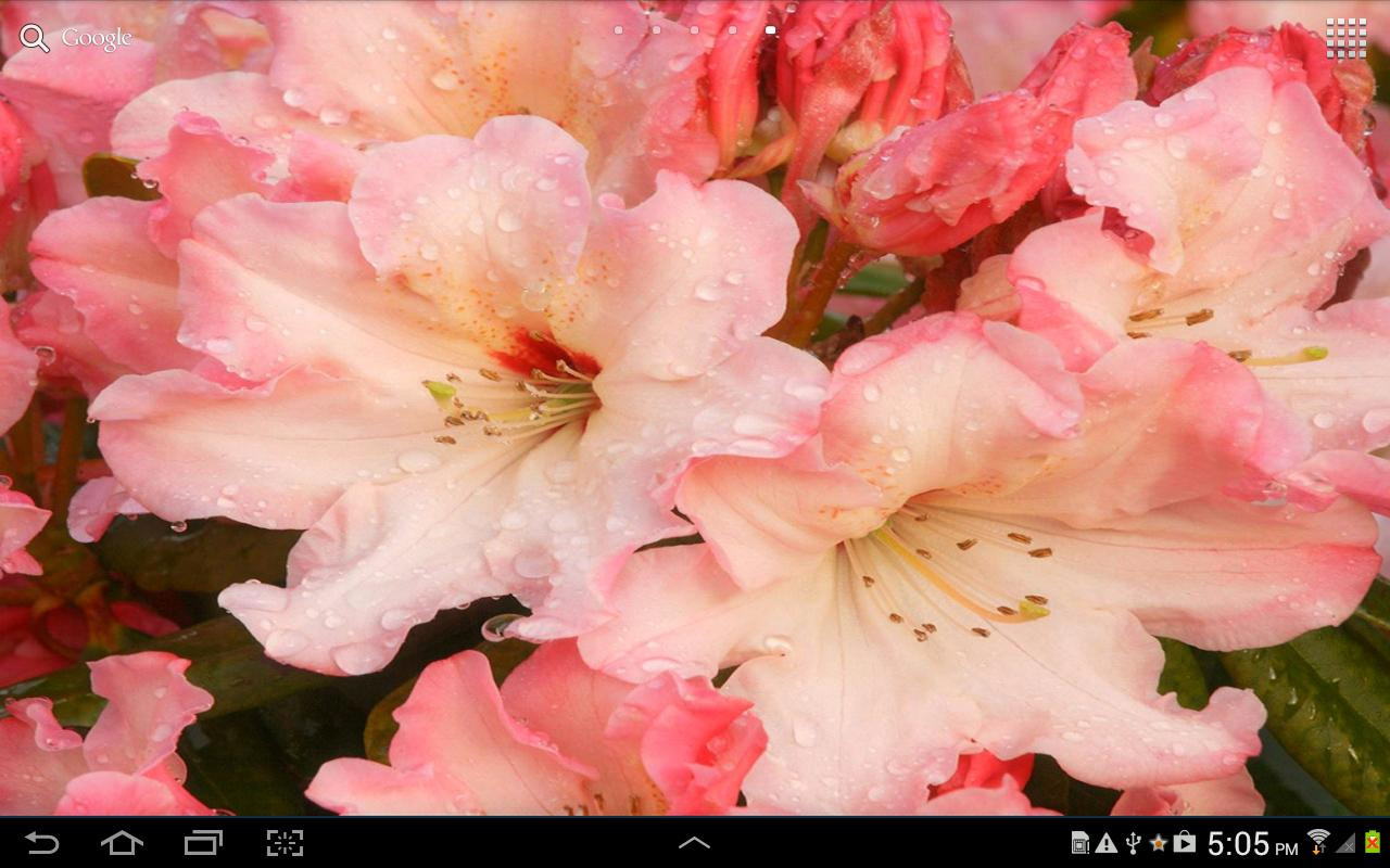 Flowers Live Wallpaper - screenshot