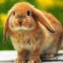 3D cute rabbit 1 logo