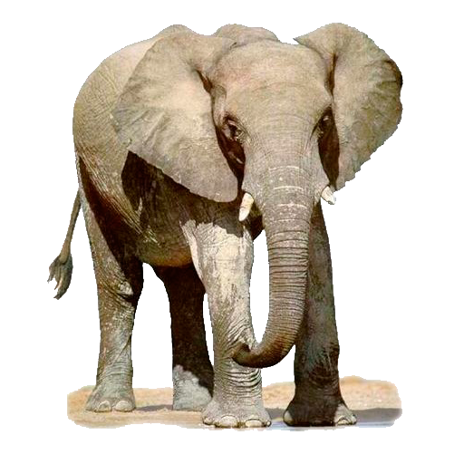 Widgets store: Elephant LOGO-APP點子