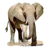 Widgets store: Elephant
