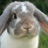 HD Cute Bunny rabbit Wallpaper icon