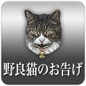 Revelation of feral cats icon