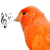 Canary Tutor