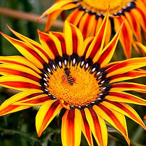 by Vijay Singh - Flowers Flowers in the Wild