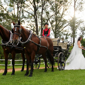 Fairy tail wedding by Béanca Van Heerden - Wedding Bride & Groom ( love story, wedding, horse, fairy tail, bride, groom )