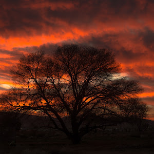 tree in the sunset-1.jpg