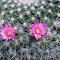 pinkcactus.jpg