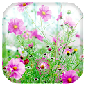 Fleurs douces fond animé icon