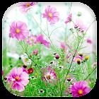 甘いの花咲ライブ壁紙 icon