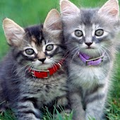 Love Cats Backgrounds i