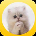 Please Cat - lol cat icon