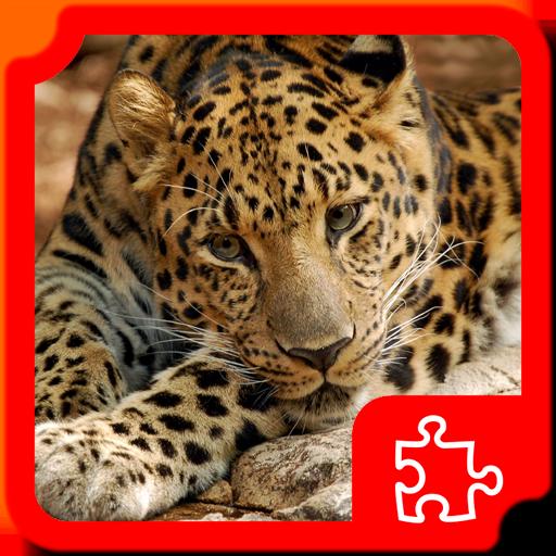 解謎App|大型貓科動物拼圖 LOGO-3C達人阿輝的APP