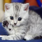 Симпатичные Котята Обои