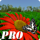 live wallpaper butterfly pro x
