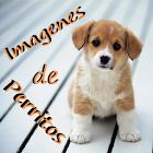 Fotos de filhotes icon