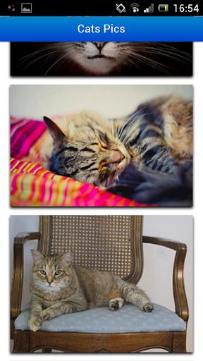 Cats Pics