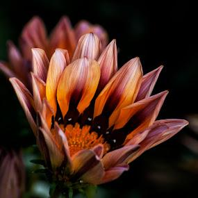 by Subhasis Ghosh - Flowers Flower Gardens ( beauty, flower )
