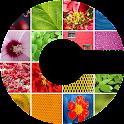 CryptoPhoto icon