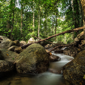 Malaysia Rainforest  by Stephen Ckk - Landscapes Forests