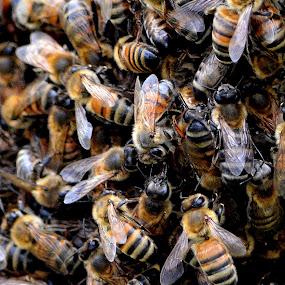 by Milton Moreno - Nature Up Close Hives & Nests (  )