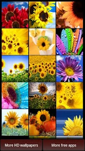Sunflowers HD Wallpapers