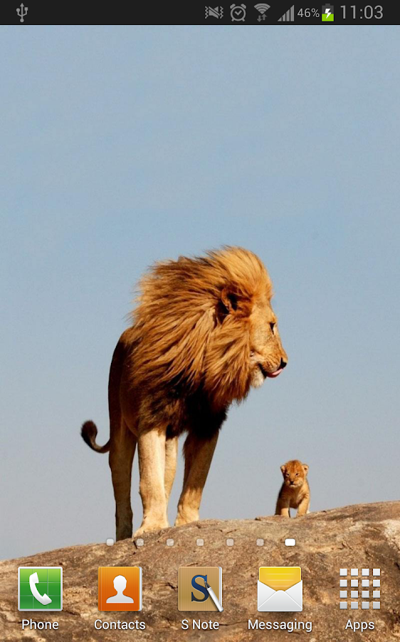 Amazing Lions Wallpapers Android Apps On Google Play