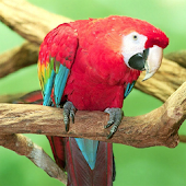 Amazing Parrots Wallpapers